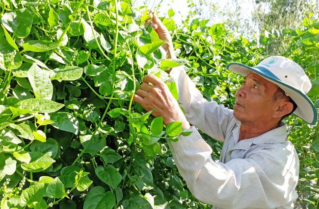 Long An: Trồng loại rau học sinh lấy nhựa làm mực viết, nông dân lấy hạt bán với giá 200.000 đồng/kg  - Ảnh 3.
