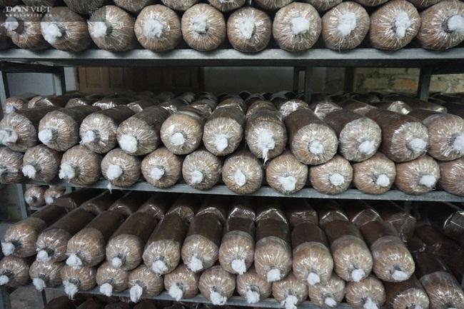 Đà Nẵng: Tự học nghề trồng nấm qua mạng, chàng trai 8X thu lãi 400 triệu đồng mỗi năm - Ảnh 2.