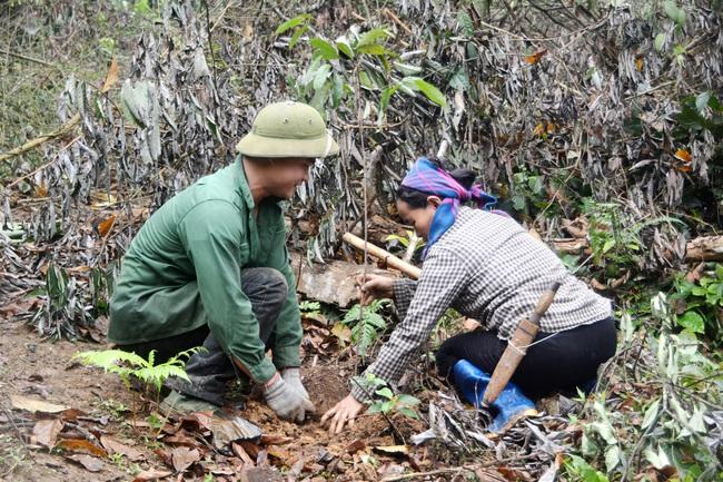 Ngày Thế giới trồng cây: Trồng hơn 21.000 cây gỗ lớn rừng đầu nguồn - Ảnh 3.