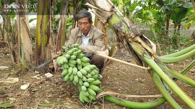 """Ninh Bình: Trồng loại cây ngoại """"bán từ gốc đến ngọn"""", lão nông bỏ túi hơn nửa tỷ/năm. - Ảnh 5."""