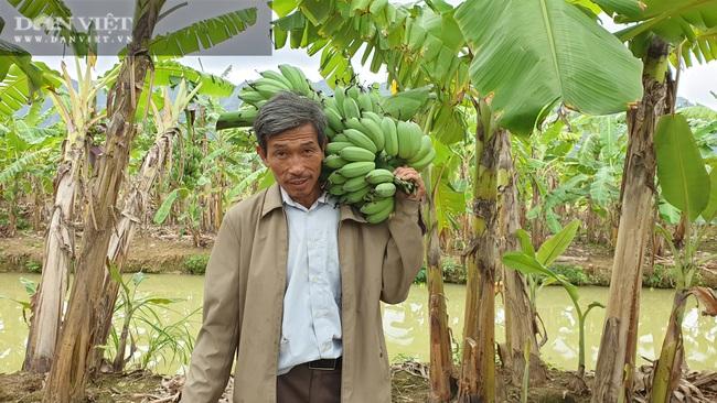 """Ninh Bình: Trồng loại cây ngoại """"bán từ gốc đến ngọn"""", lão nông bỏ túi hơn nửa tỷ/năm. - Ảnh 7."""