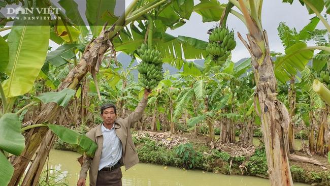 """Ninh Bình: Trồng loại cây ngoại """"bán từ gốc đến ngọn"""", lão nông bỏ túi hơn nửa tỷ/năm. - Ảnh 2."""