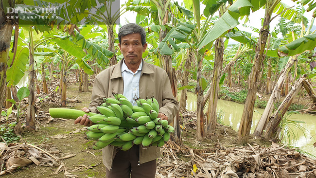 """Ninh Bình: Trồng loại cây ngoại """"bán từ gốc đến ngọn"""", lão nông bỏ túi hơn nửa tỷ/năm. - Ảnh 8."""