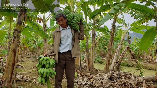 """Ninh Bình: Trồng loại cây ngoại """"bán từ gốc đến ngọn"""", lão nông bỏ túi hơn nửa tỷ/năm. - Ảnh 3."""
