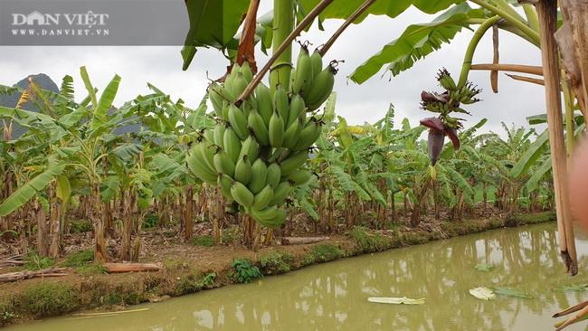 """Ninh Bình: Trồng loại cây ngoại """"bán từ gốc đến ngọn"""", lão nông bỏ túi hơn nửa tỷ/năm. - Ảnh 4."""