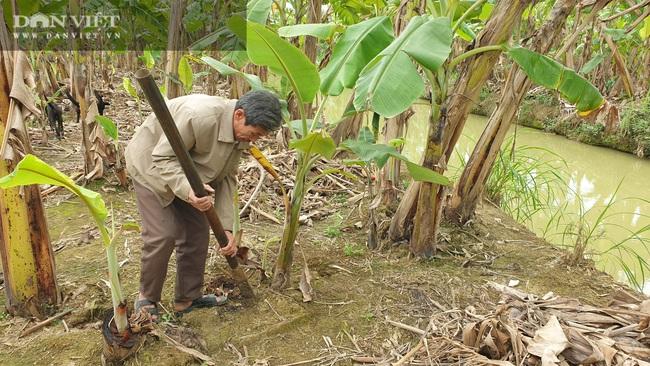 """Ninh Bình: Trồng loại cây ngoại """"bán từ gốc đến ngọn"""", lão nông bỏ túi hơn nửa tỷ/năm. - Ảnh 6."""