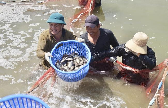 Tại huyện Hòa Vang (Đà Nẵng): Vốn tín dụng chính sách giúp nhà nông đổi đời - Ảnh 1.