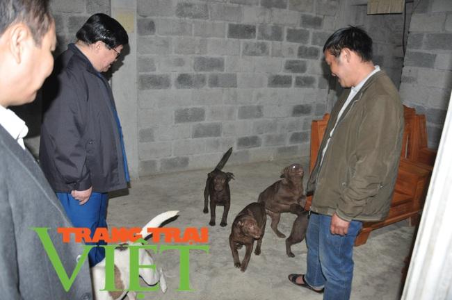 Chủ tịch Hội Nông dân Việt Nam gợi mở điều này giúp dân nuôi chó Mông Cộc ở Hà Giang làm giàu nhanh - Ảnh 2.
