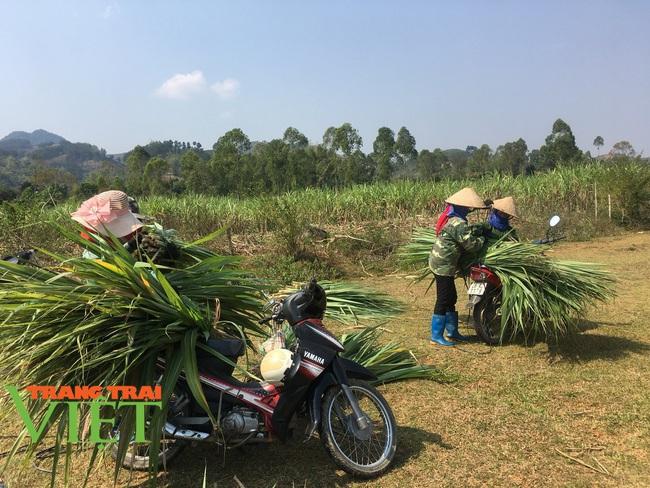 Người dân Nà Bó chung tay cùng chính quyền gìn giữ các tiêu chí nông thôn mới - Ảnh 5.