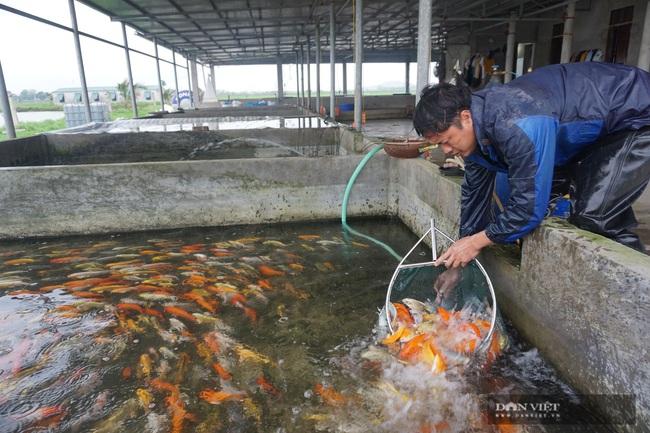 """Nam Định: Nuôi loài cá """"sang chảnh"""", có con dài gần 1 mét, bán giá nghìn đô, 8X này thu tiền tỷ - Ảnh 6."""