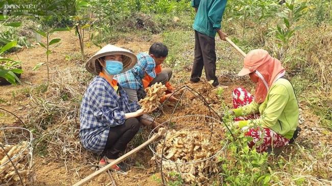 """Rời Sài Gòn hoa lệ, 8X xứ Quảng thành bà chủ trên vùng đất trước đây nhiều người gọi là """"khỉ ho gà gáy"""" - Ảnh 5."""