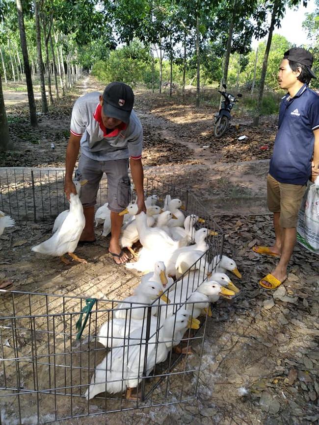 Giá gia cầm hôm nay 27/3:Cập nhật giá các loại gà, vịt mới nhất tại các vùng - Ảnh 1.
