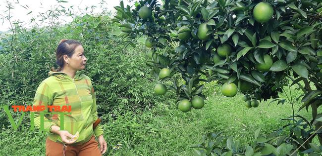 Nông dân Cao Phong phất lên nhờ trồng loại cây này - Ảnh 2.