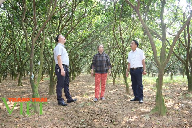 Nông dân Cao Phong phất lên nhờ trồng loại cây này - Ảnh 3.
