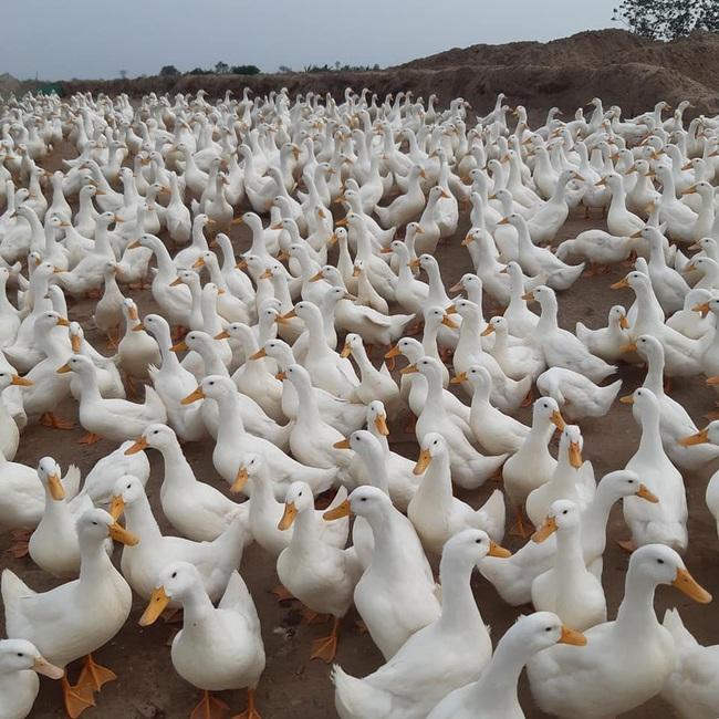 Giá gia cầm hôm nay 3/3: Cập nhật giá các loại gà, vịt mới nhất tại ba miền - Ảnh 2.