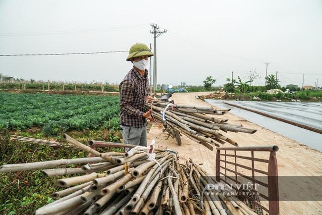 Nông dân Chí Linh hồ hởi đội mưa thu hoạch nông sản hậu cách ly xã hội - Ảnh 10.