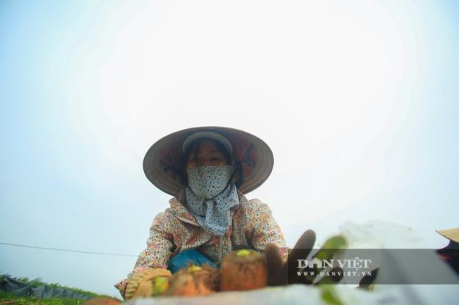 Nông dân Chí Linh hồ hởi đội mưa thu hoạch nông sản hậu cách ly xã hội - Ảnh 7.