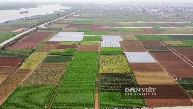 Nông dân Chí Linh hồ hởi đội mưa thu hoạch nông sản hậu cách ly xã hội - Ảnh 1.