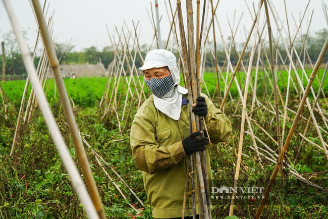 Nông dân Chí Linh hồ hởi đội mưa thu hoạch nông sản hậu cách ly xã hội - Ảnh 9.