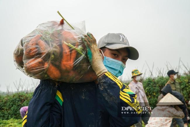 Nông dân Chí Linh hồ hởi đội mưa thu hoạch nông sản hậu cách ly xã hội - Ảnh 8.