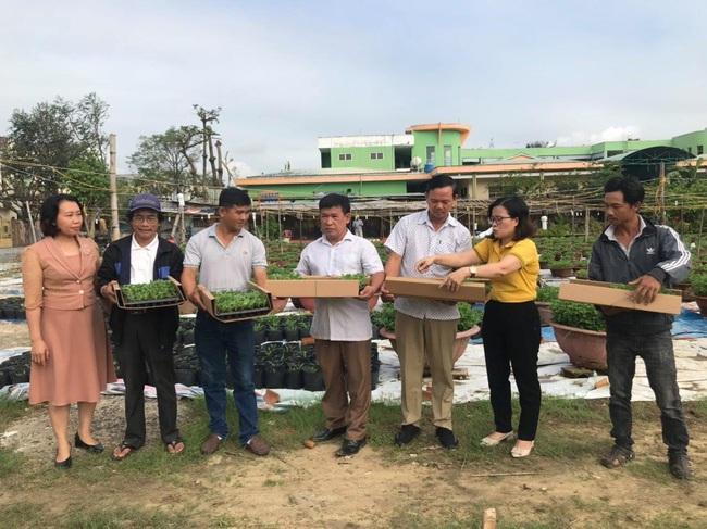 Nông dân Đà Nẵng phập phồng lo vụ hoa tết - Ảnh 1.