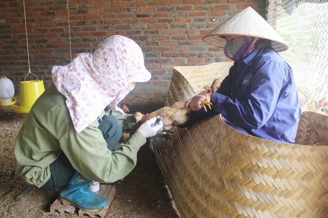 Cảnh báo nguy cơ cúm A (H5N8) lây từ gia cầm sang người - Ảnh 1.