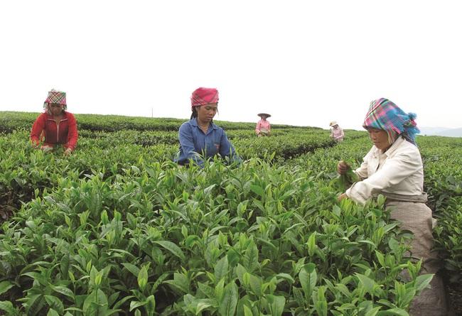 Xây dựng hơn 200 mô hình nông dân liên kết hiệu quả - Ảnh 1.