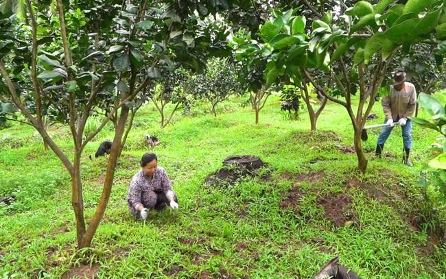 Sản xuất sạch, an toàn ở cấp nông hộ là xã viên HTX