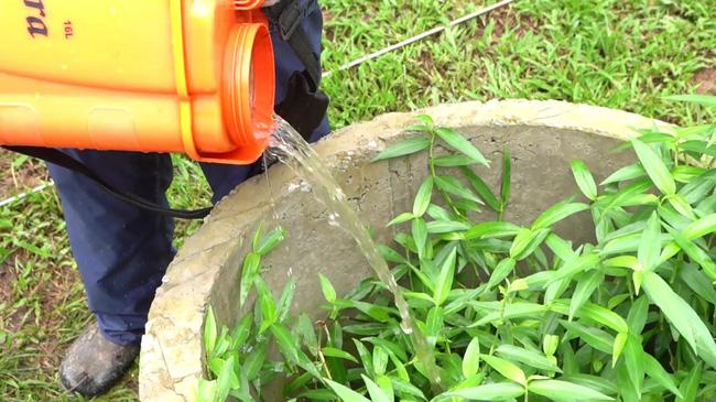 Hố Biobed tác dụng phân giải độc tố thuốc BVTV còn sót lại