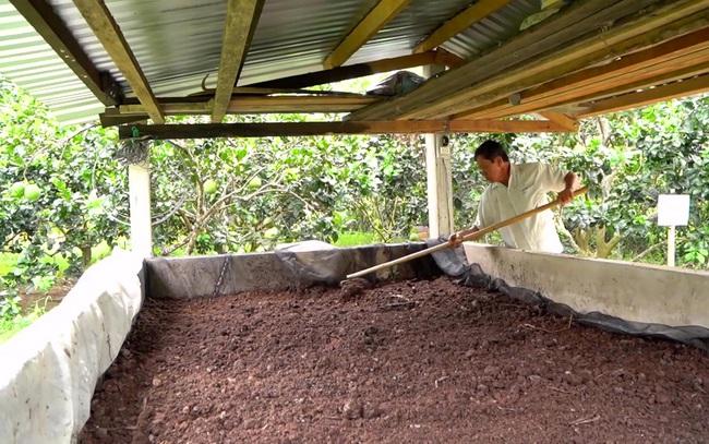 Xã viên tự ủ phân hữu cơ để bón cho vườn bưởi