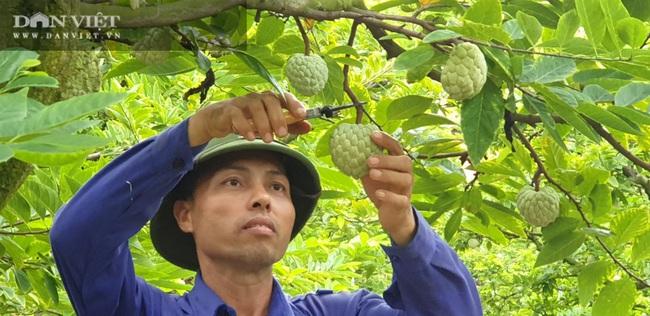 Làm nông nghiệp kiểu….Quảng Ninh - Ảnh 1.