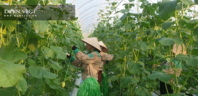 Làm nông nghiệp kiểu….Quảng Ninh - Ảnh 4.