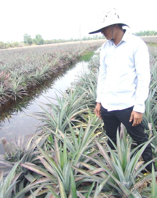 Long An: Trồng cánh đồng lớn loại trái chi chít gai, nông dân 8x thu tiền tỷ mỗi năm - Ảnh 2.