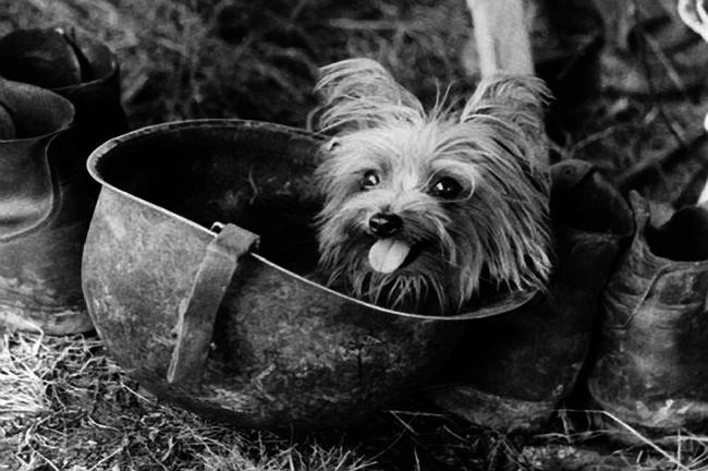 Smokey - người hùng 4 chân đáng yêu trong Chiến tranh thế giới thứ 2  - Ảnh 2.