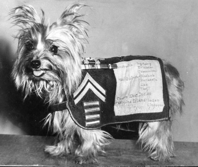Smokey - người hùng 4 chân đáng yêu trong Chiến tranh thế giới thứ 2  - Ảnh 4.