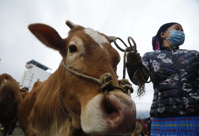 Cuối tuần đi chợ bò Mèo Vạc - Ảnh 4.