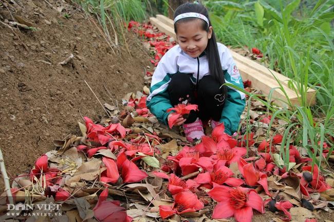 Ngẩn ngơ mùa hoa gạo đỏ rực bên dòng sông huyền thoại - Ảnh 4.