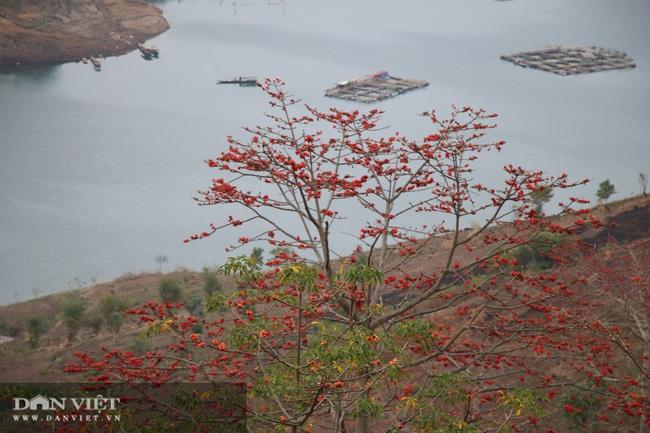 Ngẩn ngơ mùa hoa gạo đỏ rực bên dòng sông huyền thoại - Ảnh 8.