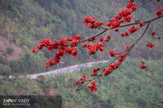 Ngẩn ngơ mùa hoa gạo đỏ rực bên dòng sông huyền thoại - Ảnh 3.