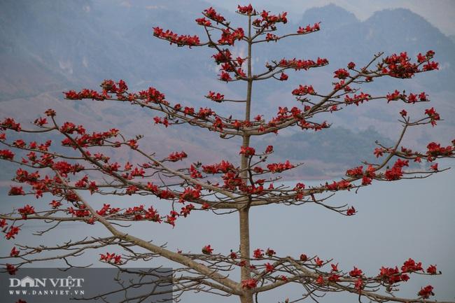 Ngẩn ngơ mùa hoa gạo đỏ rực bên dòng sông huyền thoại - Ảnh 2.