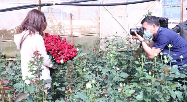 """Người dân phấn khởi thu hoạch hoa hồng cận ngày Quốc tế Phụ nữ, """"vớt vát"""" mùa Covid-19 - Ảnh 7."""