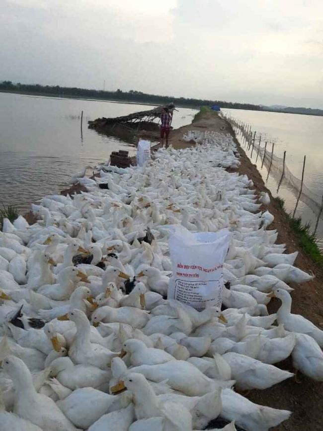 Giá gia cầm hôm nay 6/3: Cập nhật giá gà công nghiệp, gà lông màu, vịt thịt tại ba miền - Ảnh 1.