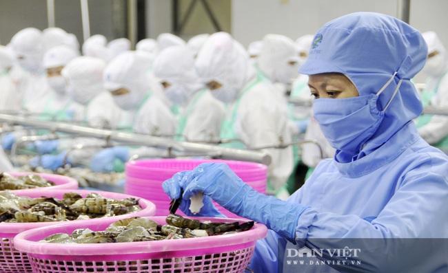 Chủ tịch Tập đoàn Minh Phú: Nhu cầu tôm tăng mạnh, Việt Nam sẽ là nhà sản xuất, chế biến tôm số 1 thế giới - Ảnh 6.