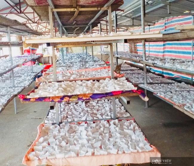 Thanh Hóa: Trồng cây sắn dây thu lời 150 triệu đồng/ha - Ảnh 8.