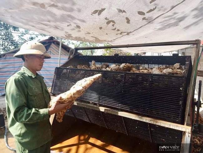 Thanh Hóa: Trồng cây sắn dây thu lời 150 triệu đồng/ha - Ảnh 1.