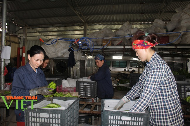Hoà Bình: Nâng cao chất lượng, năng lực cạnh tranh các sản phẩm xuất khẩu - Ảnh 1.