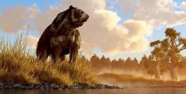 """Gấu nâu khổng lồ nhất thế giới cao 4,5m nặng 1,5 tấn: """"Sự thực hay chỉ là lời nói dối?"""" - Ảnh 3."""