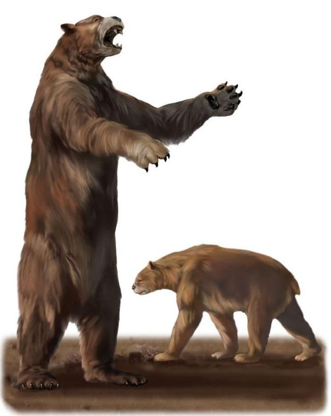 """Gấu nâu khổng lồ nhất thế giới cao 4,5m nặng 1,5 tấn: """"Sự thực hay chỉ là lời nói dối?"""" - Ảnh 1."""