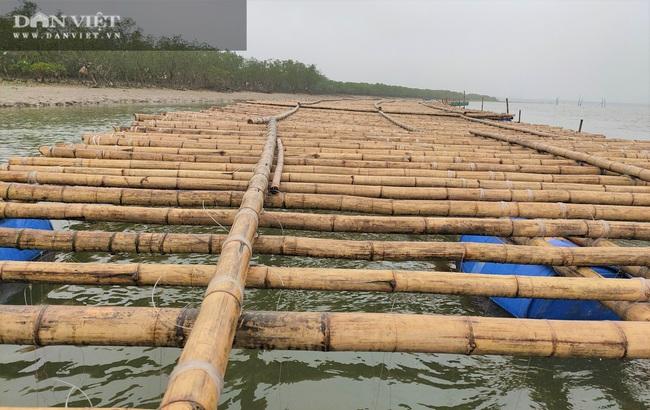 Nông dân Hà Tĩnh kỳ vọng nuôi hàu sữa Thái Bình Dương - Ảnh 4.