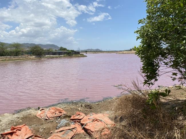 """Cận cảnh đầm nước màu hồng vì bị """"uống nước thải"""" - Ảnh 7."""